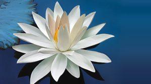 Flor de fé